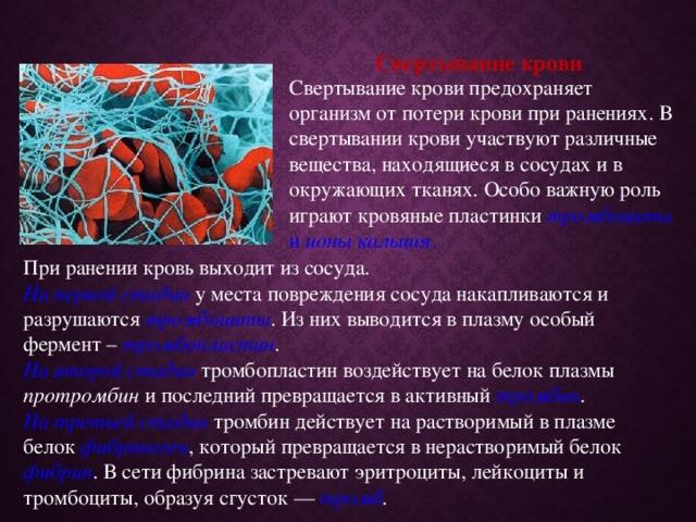 Свертывание крови Свертывание крови предохраняет организм от потери крови при ранениях. В свертывании крови участвуют различные вещества, находящиеся в сосудах и в окружающих тканях. Особо важную роль играют кровяные пластинки тромбоциты и ионы кальция . При ранении кровь выходит из сосуда. На первой стадии у места повреждения сосуда накапливаются и разрушаются тромбоциты . Из них выводится в плазму особый фермент – тромбопластин . На второй стадии тромбопластин воздействует на белок плазмы протромбин и последний превращается в активный тромбин . На третьей стадии тромбин действует на растворимый в плазме белок фибриноген , который превращается в нерастворимый белок фибрин . В сети фибрина застревают эритроциты, лейкоциты и тромбоциты, образуя сгусток — тромб .