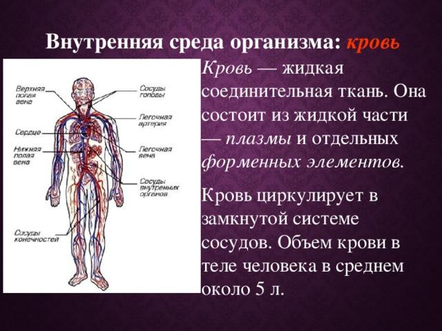 Внутренняя среда организма: кровь Кровь — жидкая соединительная ткань. Она состоит из жидкой части — плазмы и отдельных форменных элементов. Кровь циркулирует в замкнутой системе сосудов. Объем крови в теле человека в среднем около 5 л.