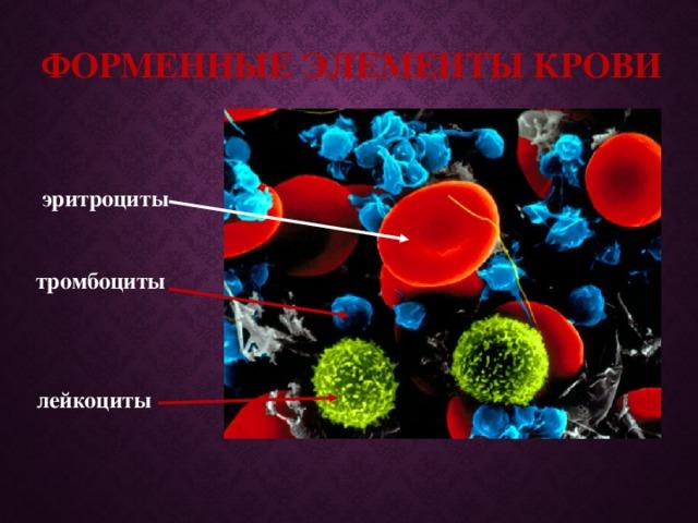 Форменные элементы крови эритроциты тромбоциты лейкоциты