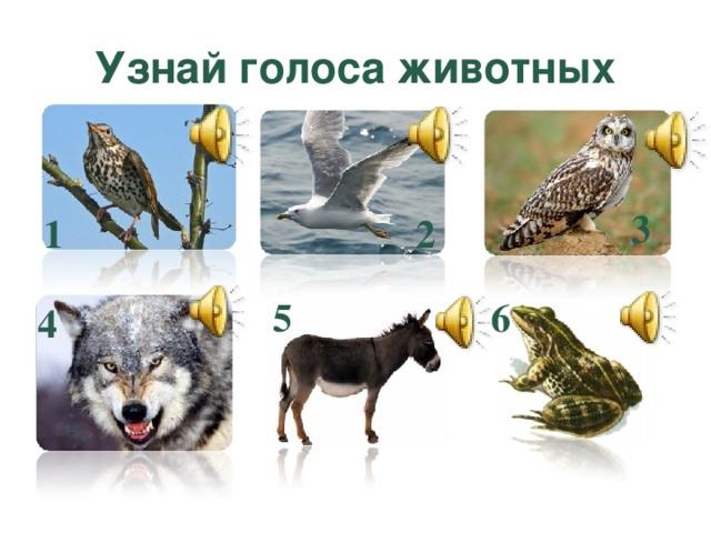 Узнай голоса животных 3 2 1 6 5 4