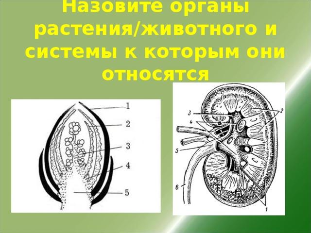 Назовите органы растения/животного и системы к которым они относятся