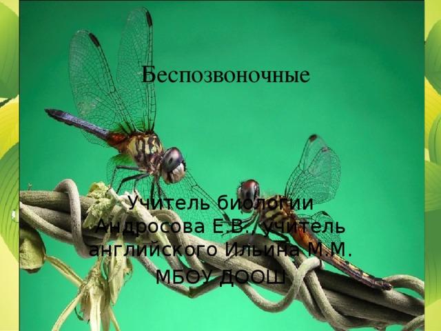Беспозвоночные Учитель биологии Андросова Е.В., учитель английского Ильина М.М. МБОУ ДООШ