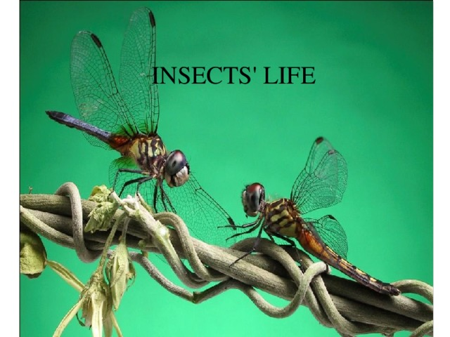 Relax Time INSECTS' LIFE « Head,  shoulders,  knees  and toes»