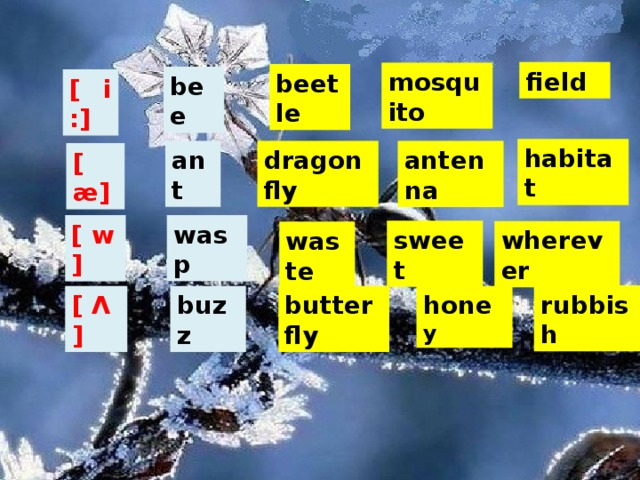 field mosquito beetle bee [ i :] habitat ant dragonfly antenna [ æ] wasp [ w ] sweet wherever waste rubbish [ Ʌ ] buzz butterfly hone y