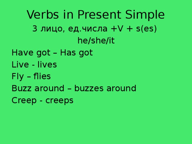 Verbs in Present Simple 3 лицо, ед.числa +V + s(es) he/she/it Have got – Has got Live - lives Fly – flies Buzz around – buzzes around Creep - creeps