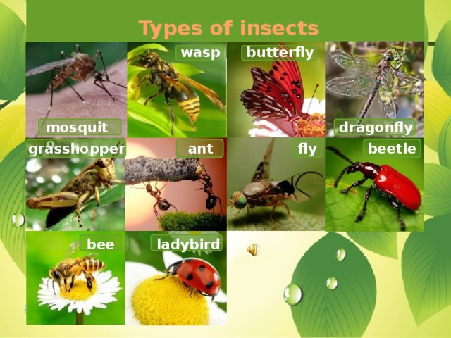 Types of insects butterfly wasp mosquito dragonfly ant beetle grasshopper fly ladybird bee
