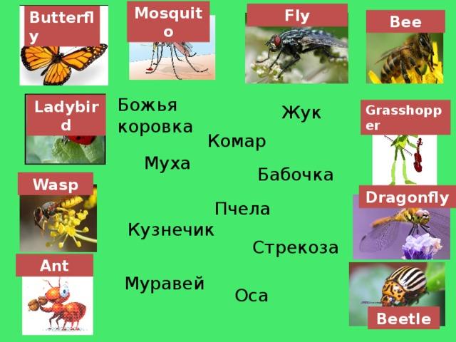 Mosquito Fly Butterfly Bee Божья коровка Ladybird Жук Grasshopper Комар Муха Бабочка Wasp Dragonfly Пчела Кузнечик Стрекоза Ant Муравей Оса Beetle