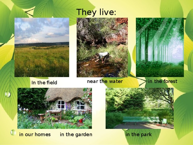 They live: near the water in the forest In the field in the garden in the park in our homes