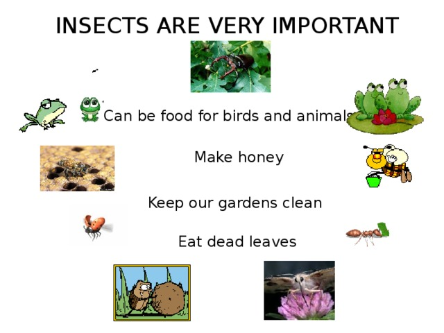 INSECTS ARE VERY IMPORTANT Can be food for birds and animals Make honey Keep our gardens clean Eat dead leaves
