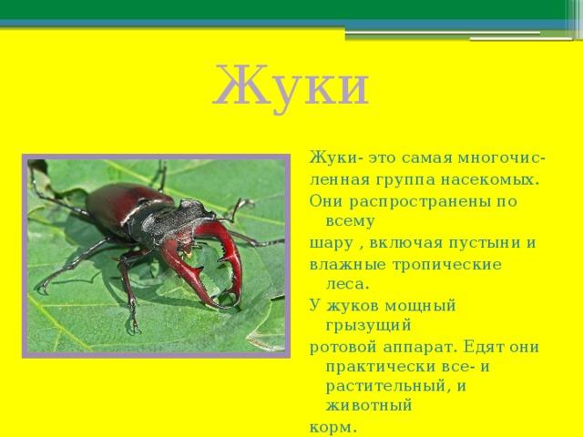 Жуки Жуки- это самая многочис- ленная группа насекомых. Они распространены по всему шару , включая пустыни и влажные тропические леса. У жуков мощный грызущий ротовой аппарат. Едят они практически все- и растительный, и животный корм.