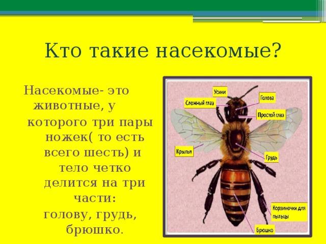 Кто такие насекомые? Насекомые- это животные, у которого три пары ножек( то есть всего шесть) и тело четко делится на три части: голову, грудь, брюшко .