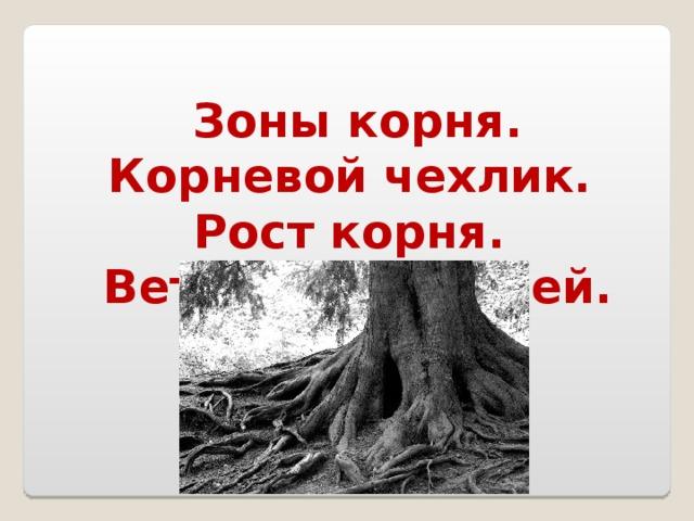 Зоны корня. Корневой чехлик. Рост корня. Ветвление корней.