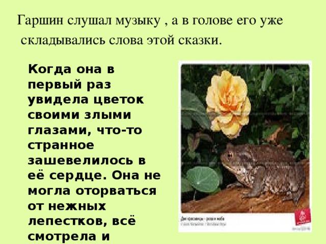 главная мысль сказки о жабе и розе с картинками