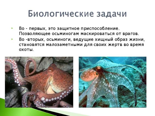 Во - первых, это защитное приспособление. Позволяющее осьминогам маскироваться от врагов. Во -вторых, осьминоги, ведущие хищный образ жизни, становятся малозаметными для своих жертв во время охоты.