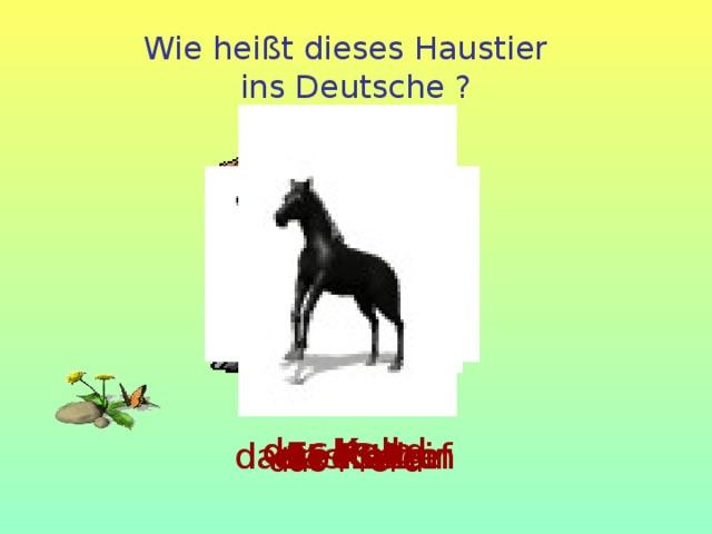 Wie heißt dieses Haustier  ins Deutsche ? der Hund das Kalb die Katze die Kuh das Schaf das Schwein  das Pferd