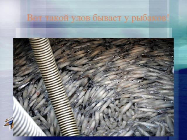 Вот такой улов бывает у рыбаков!