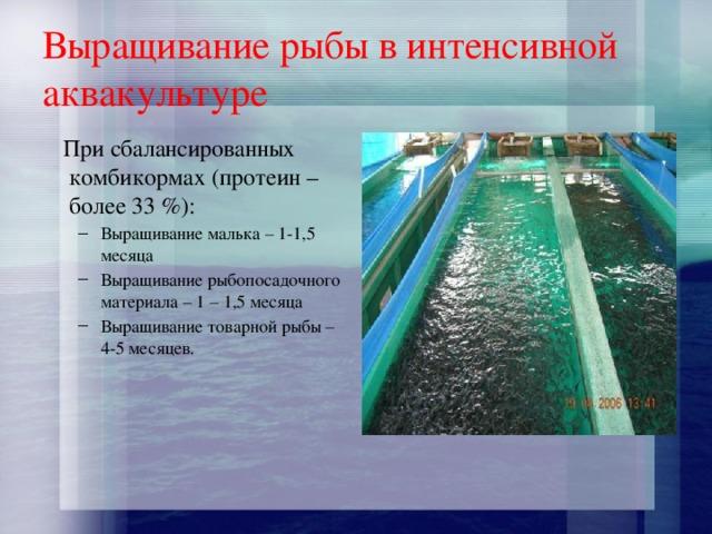 Выращивание рыбы в интенсивной аквакультуре  При сбалансированных комбикормах (протеин – более 33 %):