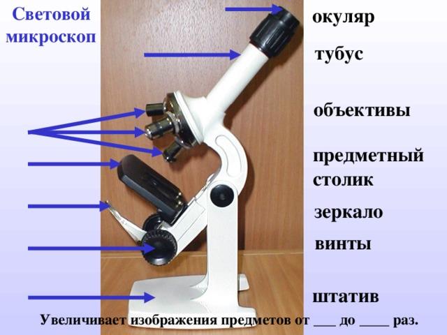 Световой микроскоп окуляр тубус объективы предметный столик зеркало винты штатив  Увеличивает  изображения предметов от ___ до ____ раз.