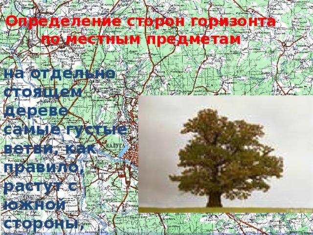 Определение сторон горизонта по местным предметам на отдельно стоящем дереве самые густые ветви, как правило, растут с южной стороны, поскольку туда попадает больше солнечных лучей