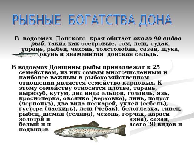 В водоемах Донского края обитает около 90 видов рыб , таких какосетровые, сом, лещ, судак, тарань, рыбец, чехонь, толстолобик, сазан, щука, окуньи знаменитая донская сельдь.  В водоемах Донщины рыбы принадлежат к 25 семействам, из них самым многочисленным и наиболее важным в рыбохозяйственном отношении является семейство карповых. К этому семейству относятся плотва, тарань, вырезуб, кутум, два вида ельцов, голавль, язь, красноперка, овсянка (верховка), линь, подуст (чернопуз), два вида пескарей, уклея (себель), густера (ласкирь), лещ (чебак), белоглазка, синец, рыбец, шемая (селява), чехонь, горчак, караси золотой и серебряный, жерех (белизна), сазан, белый и пестрый толстолобики — всего 30 видов и подвидов .