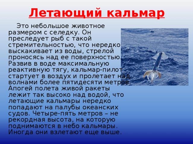 Летающий кальмар  Это небольшое животное размером с селедку. Он преследует рыб с такой стремительностью, что нередко выскакивает из воды, стрелой проносясь над ее поверхностью. Развив в воде максимальную реактивную тягу, кальмар-пилот стартует в воздух и пролетает над волнами более пятидесяти метров. Апогей полета живой ракеты лежит так высоко над водой, что летающие кальмары нередко попадают на палубы океанских судов. Четыре-пять метров – не рекордная высота, на которую поднимаются в небо кальмары. Иногда они взлетают еще выше.