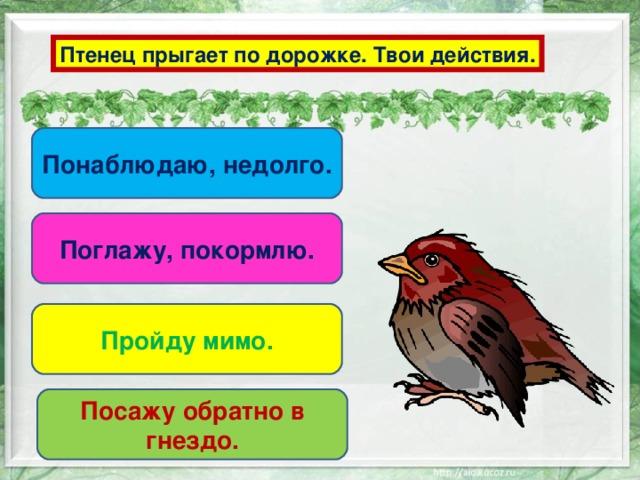 Птенец прыгает по дорожке. Твои действия. Понаблюдаю, недолго. Поглажу, покормлю. Пройду мимо. Посажу обратно в гнездо.