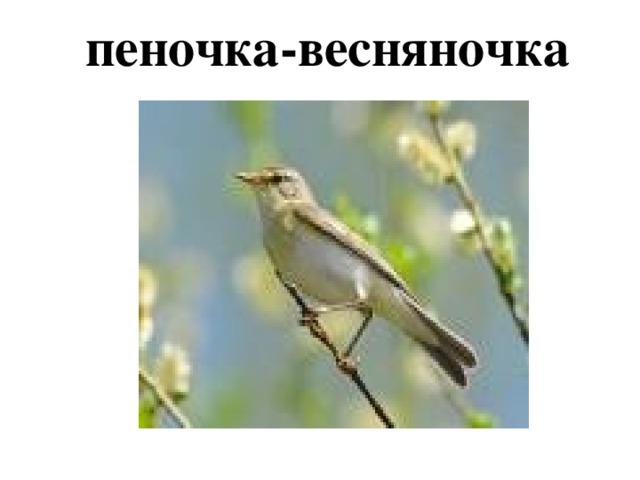 пеночка-весняночка