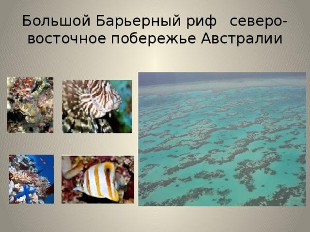 Большой Барьерный риф  северо-восточное побережье Австралии Большо́й Барье́рный риф — гряда коралловых рифов и островов в Коралловом море, протянувшаяся вдоль северо-восточного побережья Австралии на 2500 км. Современная история его развития длится около 8000 лет. Уязвимость экосистем коралловых рифов объясняется тем, что для роста кораллов необходимы особые условия. Температура воды не должна быть ниже 17,5 °C (идеальная температура 22—27 °C). Вода, в которой растут кораллы, должна обладать определённой соленостью. Там обитают Рыба-бабочка, синекольчатый осьминог, яд которого убивает человека. Здесь обитает более 400 видов кораллов. На Большом барьерном рифе обитает около 1500 видов морских рыб. Острова Южного Рифа — место размножения морских черепах. Здесь обитает также огромное число ракообразных: крабов, креветок, лангустов и омаров. Даже небольшой риф дает убежище примерно сотне различных видов креветок и крабов. На рифе также много моллюсков.