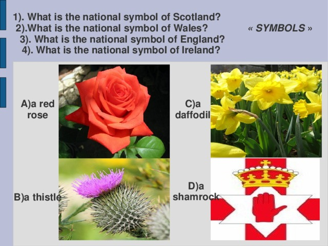 1). What is the national symbol of Scotland? 2).What is the national symbol of Wales? « SYMBOLS » 3). What is the national symbol of England? 4). What is the national symbol of Ireland? C)a daffodil A)a red rose D)a shamrock B)a thistle
