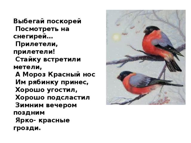 Выбегай поскорей  Посмотреть на снегирей…  Прилетели, прилетели!  Стайку встретили метели,  А Мороз Красный нос  Им рябинку принес,  Хорошо угостил,  Хорошо подсластил  Зимним вечером поздним  Ярко- красные грозди.