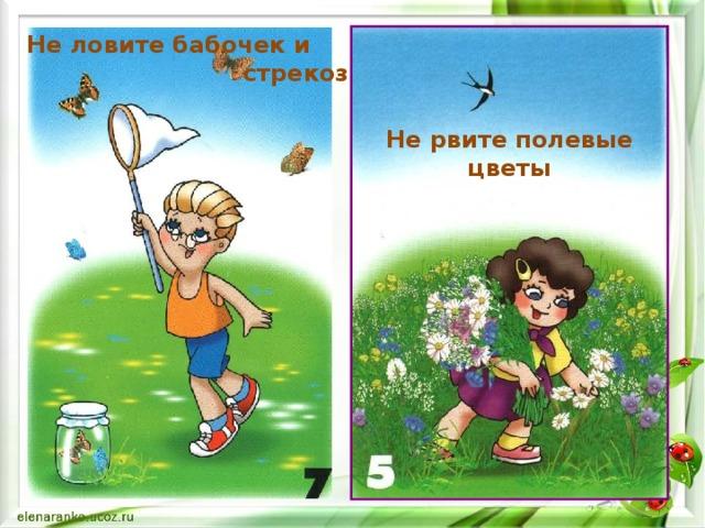 Не ловите бабочек и  стрекоз Не рвите полевые цветы