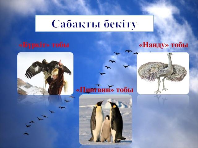 «Б үркіт» тобы «Нанду» тобы «Пингвин» тобы