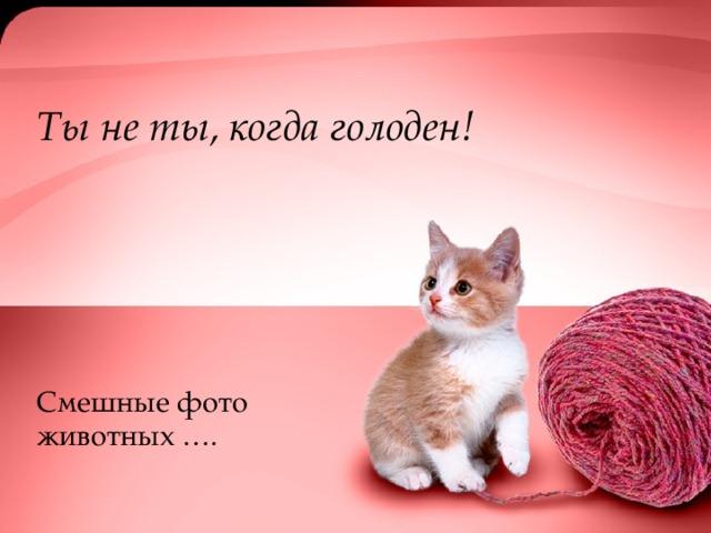 Ты не ты, когда голоден! Смешные фото животных ….