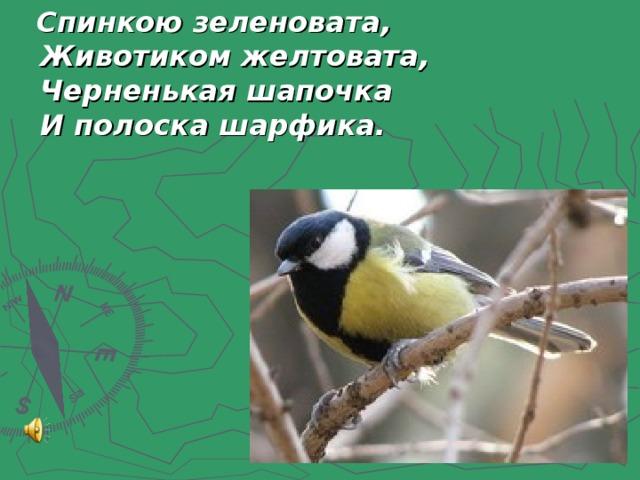 Спинкою зеленовата,  Животиком желтовата,  Черненькая шапочка  И полоска шарфика.