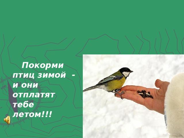 Покорми птиц зимой - и они отплатят тебе летом!!!