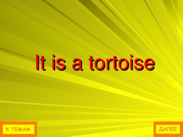 It is a tortoise