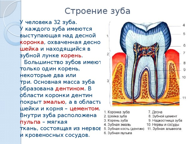 Влияет ли зубная паста на прочность зубов реферат 5136