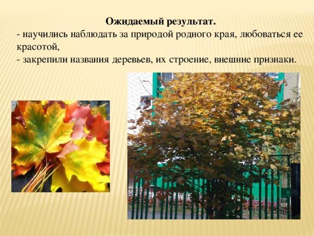 Ожидаемый результат. - научились наблюдать за природой родного края, любоваться ее красотой, - закрепили названия деревьев, их строение, внешние признаки.