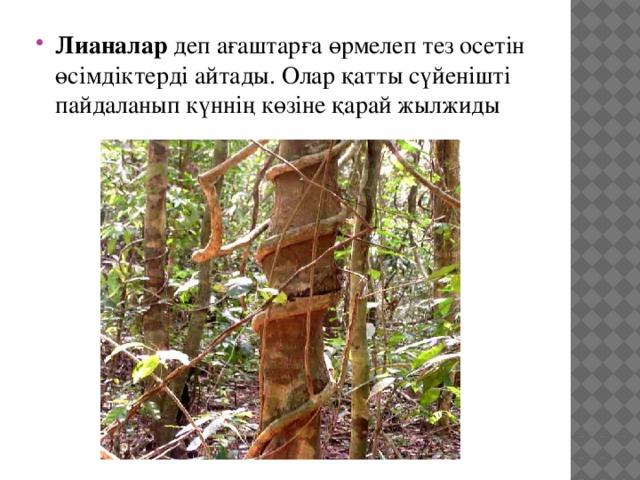 Лианалар деп ағаштарға өрмелеп тез осетін өсімдіктерді айтады. Олар қатты сүйенішті пайдаланып күннің көзіне қарай жылжиды