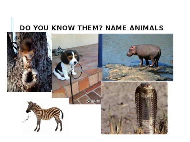 Do you know them? Name animals