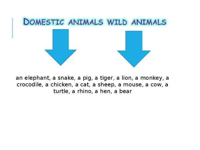 an elephant, a snake, a pig, a tiger, a lion, a monkey, a crocodile, a chicken, a cat, a sheep, a mouse, a cow, a turtle, a rhino, a hen, a bear