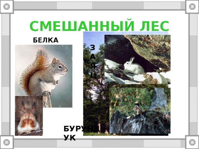 СМЕШАННЫЙ ЛЕС БЕЛКА З А Я Ц БУРУНДУК