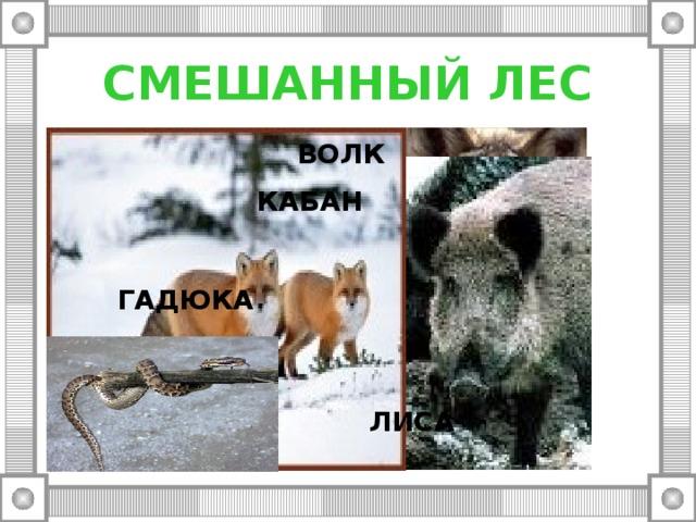 СМЕШАННЫЙ ЛЕС ВОЛК КАБАН ГАДЮКА ЛИСА