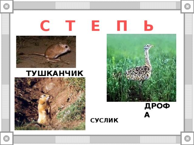 С Т Е П Ь ТУШКАНЧИК ДРОФА СУСЛИК