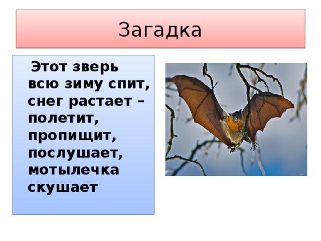 Загадка  Этот зверь всю зиму спит, снег растает – полетит, пропищит, послушает, мотылечка скушает