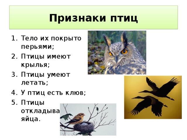 Признаки птиц