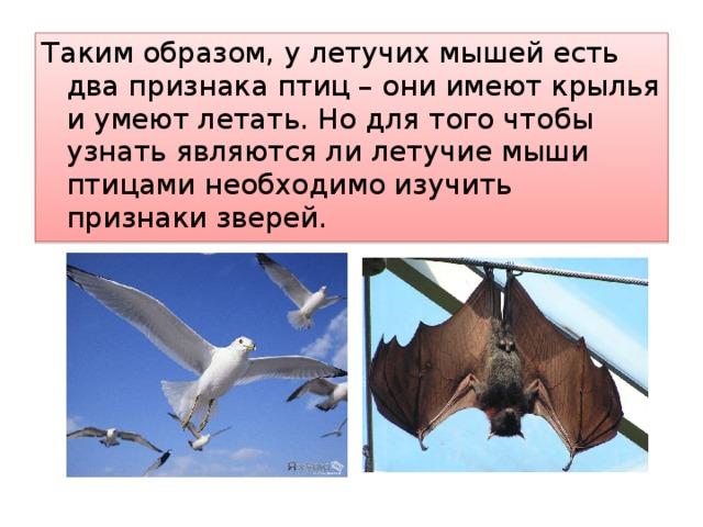 Таким образом, у летучих мышей есть два признака птиц – они имеют крылья и умеют летать. Но для того чтобы узнать являются ли летучие мыши птицами необходимо изучить признаки зверей.
