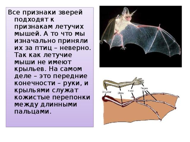 Все признаки зверей подходят к признакам летучих мышей. А то что мы изначально приняли их за птиц – неверно. Так как летучие мыши не имеют крыльев. На самом деле – это передние конечности – руки, и крыльями служат кожистые перепонки между длинными пальцами.