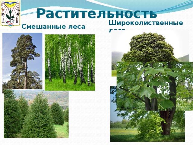 Растительность Смешанные леса Широколиственные леса