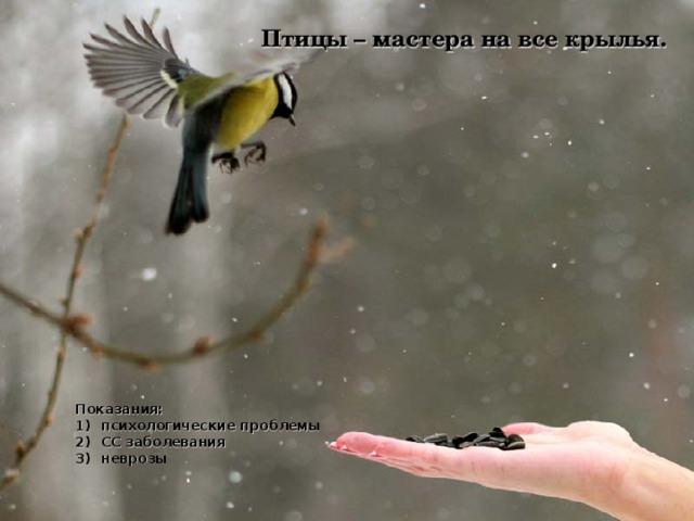 Птицы – мастера на все крылья. Показания:
